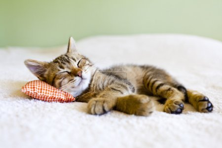 Photo for Small Kitty With Red Pillow - Royalty Free Image