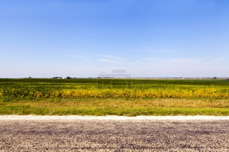 Photo for American Country Road Side View - Royalty Free Image