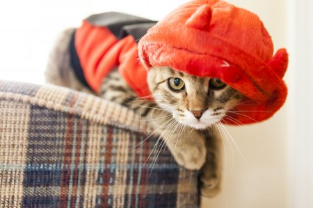 Cute Young Cat...