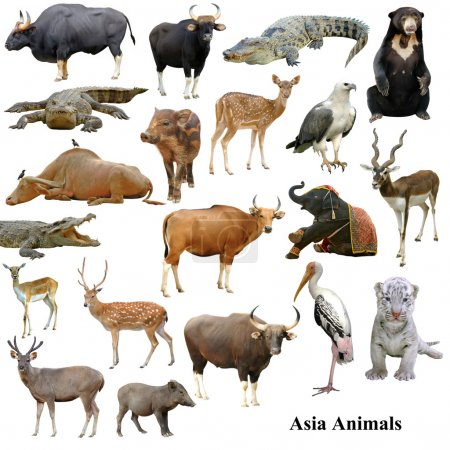 Asian animals collection isolated on white backgro...