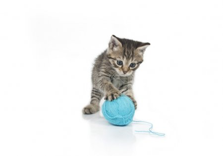 Cute grey kitten and ball of thread isolated on wh...