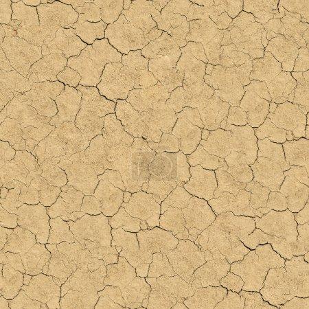 Cracked Soil. Seamless Texture.