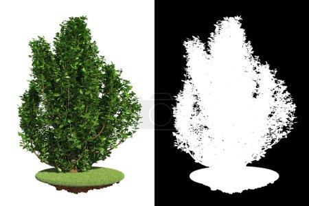 Decorative Bush Isolated on White Background.