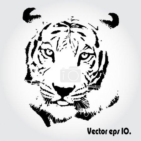 Photo pour Croquis de tigre isolé backgrond. - image libre de droit