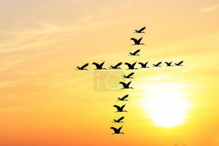 schöner & himmlischer Himmel am Abend mit Vögeln, die heilig sind