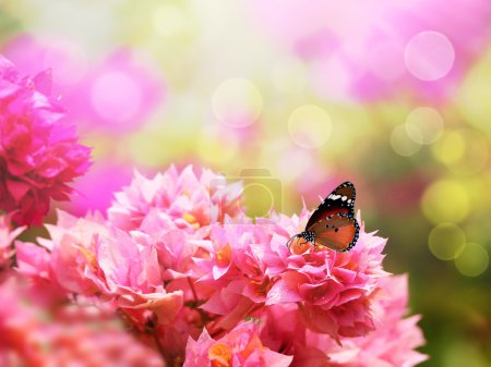 Majestic monarch butterfly on beautiful pink bougainvillea flowe