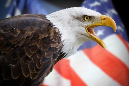 Photo pour Un magnifique aigle à tête blanche avec un fond d'un drapeau usa - image libre de droit