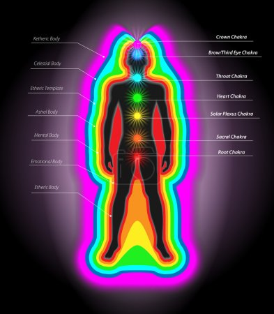 Illustration for Vector Illustration of Human Auras and Chakras, Eps10 Vector, Gradient Mesh nad Transparency Used - Royalty Free Image