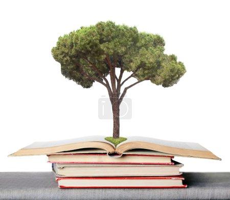 Photo pour ? éta, symbolisant les germes des connaissances tirées de livres. ? lso soit-elle eco concept - image libre de droit
