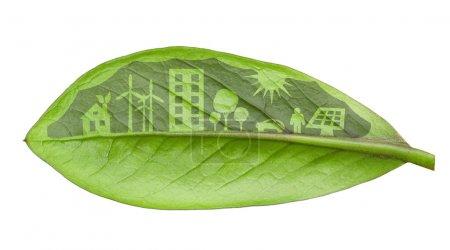 Foto de Concepto de ciudad verde, cortar las hojas de las plantas, aislado sobre whit - Imagen libre de derechos