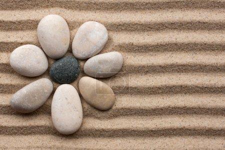 Photo pour Fleur de pierre sur fond de sable - image libre de droit
