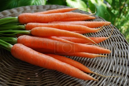 Photo for A bunch of fresh carrots on natural background - Royalty Free Image