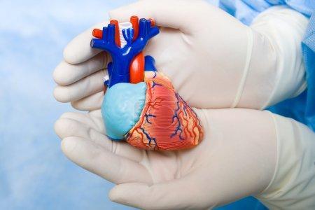 Photo pour Coeur humain dans les mains du médecin avec un gant - image libre de droit