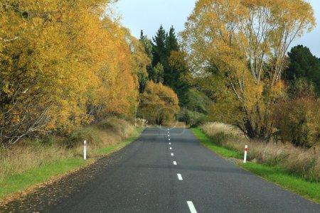 Photo pour Longue route qui s'étend au loin avec arbre automne en Nouvelle Zélande - image libre de droit