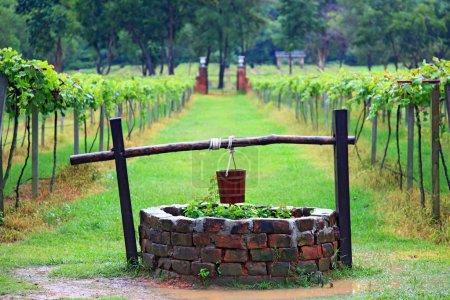 Photo pour Proche du puits d'eau dans le vignoble - image libre de droit