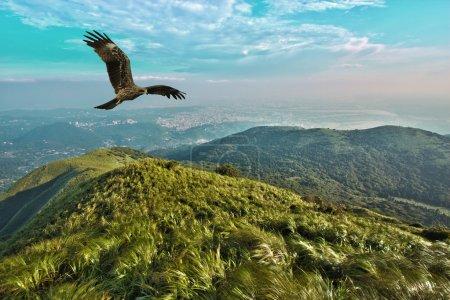 Photo pour Cerf-volant noir vol libre dans un ciel nuageux bleu au-dessus des montagnes, Milvus migrans - image libre de droit