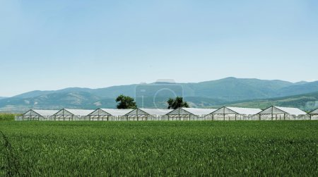 Photo for Greenhouse plantation and cultivated land on the foreground - Royalty Free Image