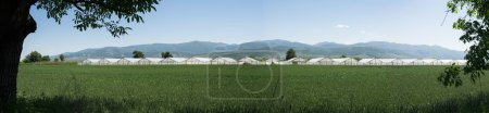 Photo for Greenhouse plantation and cultivated land. Panoramic image - Royalty Free Image