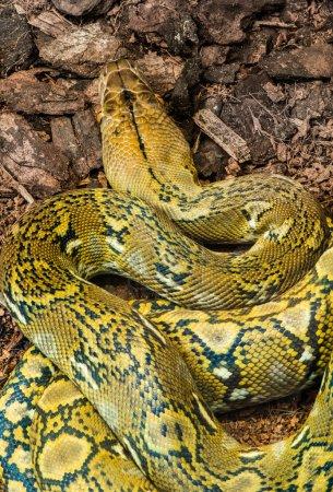 Schlange kriecht auf die Erde