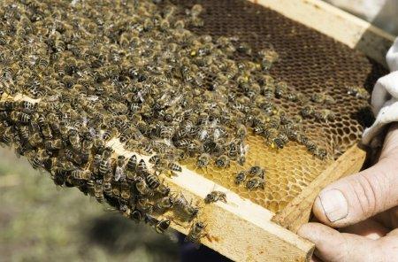 Close up honeycombs