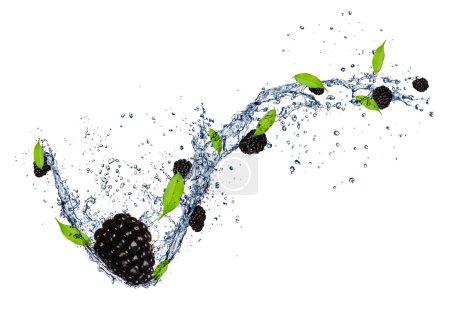 Photo pour Mûres fraîches dans les éclaboussures d'eau, isolé sur fond blanc - image libre de droit