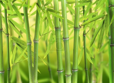 Photo for Bamboo sprouts forest - Royalty Free Image