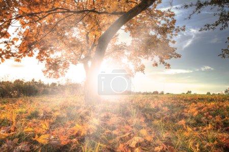 Photo pour Détail de l'arbre avec des rayons de soleil derrière - image libre de droit