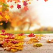 Colored autumn leaves on wooden planks...