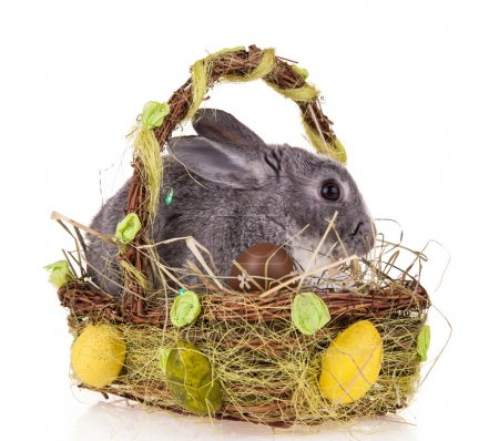Rabbit in basket on white background