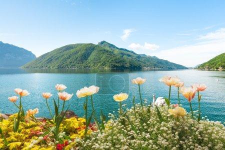 Flowers near lake with swans, Lugano, Switzerland