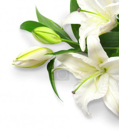 Photo for Bouquet of white lilies on a white background - Royalty Free Image