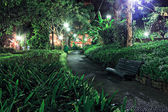 tropical park by night