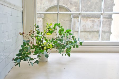 Photo for Leaves and twigs in avintage jug on a window sill - Royalty Free Image