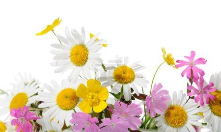 Photo pour Bordure de fleurs sauvages sur fond blanc - image libre de droit