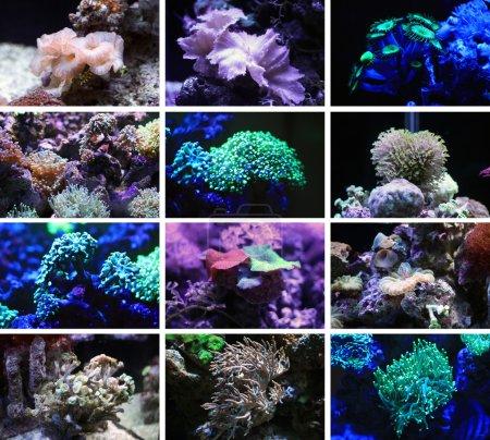 Photo pour Des coraux. Les habitants du monde sous-marin . - image libre de droit