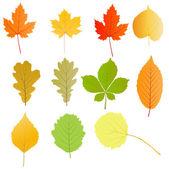 Autumn leaves set vector background