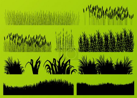 Illustration for Plants, grass and flowers detailed silhouettes illustration collection background vector for poster - Royalty Free Image