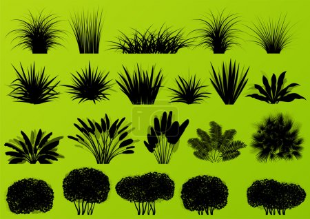 Exotic jungle bushes grass, reed, palm tree wild plants collecti
