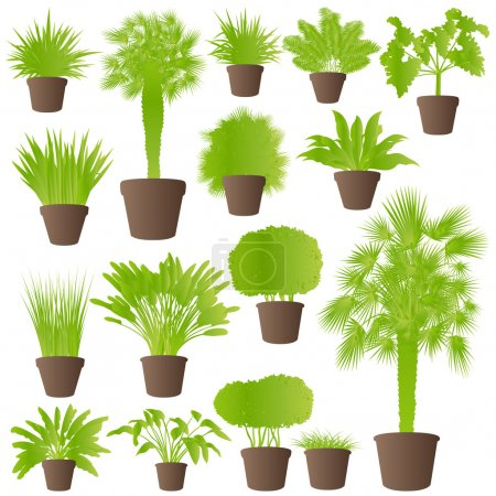 Exotic jungle bushes grass, reed, palm tree wild plants set vect