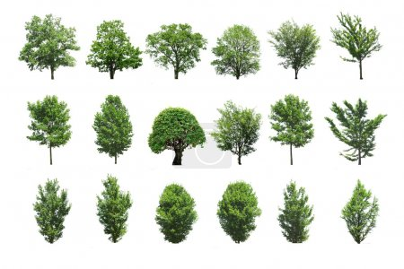 Photo for Collection tree isolated on white background - Royalty Free Image
