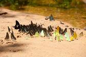 Skupina motýlů