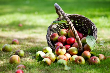 Photo for Fresh and colorful apples in basket, selective focus - Royalty Free Image