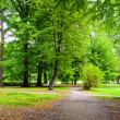 Park in autumn time - panoramic view...