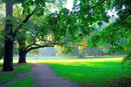 Photo pour Parc au printemps - image libre de droit