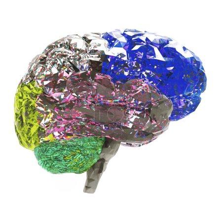 Photo pour Modèle de cerveau humain isolé sur fond blanc - image libre de droit