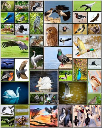 Collage of birds
