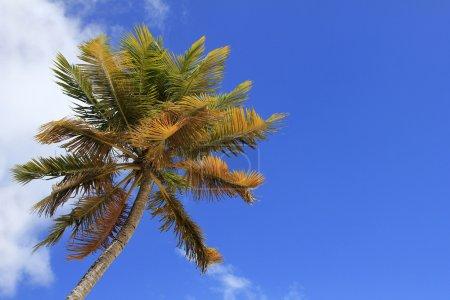 Coco-trees