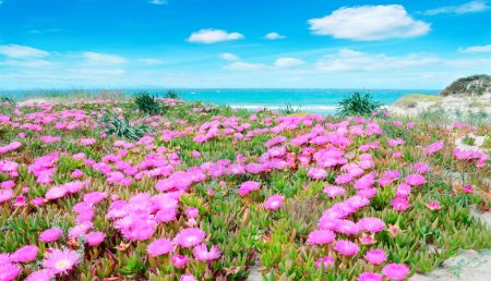 pink flowers and turquoise water
