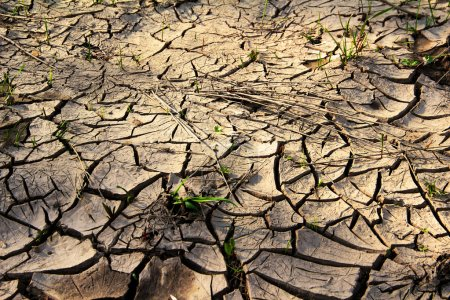 Photo for Cracked earth with grass , metaphoric for climate change and global warming. - Royalty Free Image