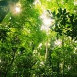 Brazilian Rainforest on a sunny day...